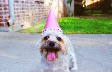 dog-party.jpg